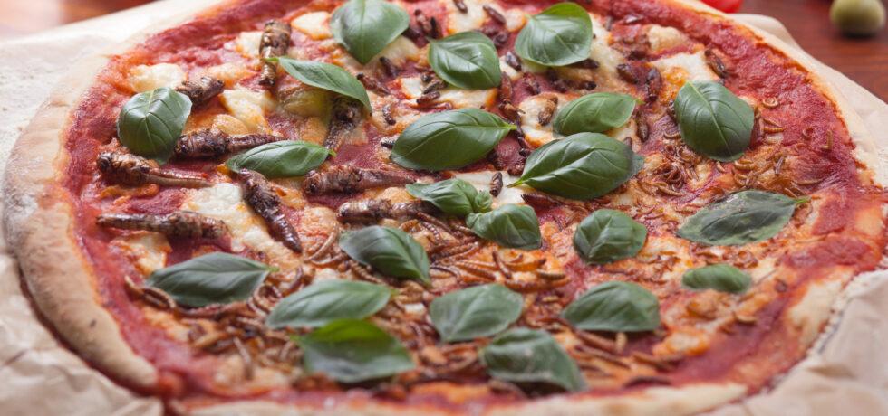 Heuschrecken, Grillen, Mehlwürmer und Buffalowürmer auf einer Pizza.